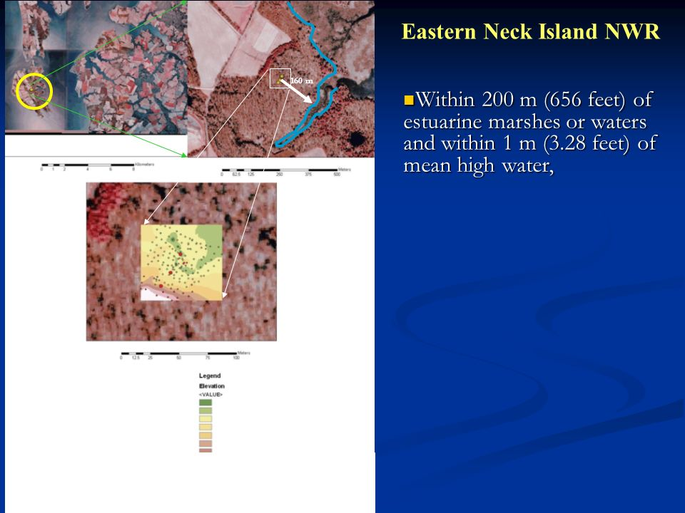 Eastern Neck Island NWR 160 m Within 200 m (656 feet) of estuarine marshes or waters and within 1 m (3.28 feet) of mean high water, Within 200 m (656 feet) of estuarine marshes or waters and within 1 m (3.28 feet) of mean high water,
