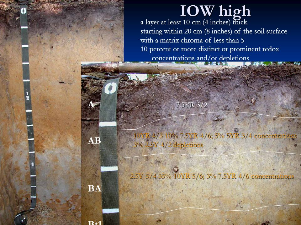 IOW high a layer at least 10 cm (4 inches) thick starting within 20 cm (8 inches) of the soil surface with a matrix chroma of less than 5 10 percent or more distinct or prominent redox concentrations and/or depletions 7.5YR 3/2 10YR 4/3 10% 7.5YR 4/6; 5% 5YR 3/4 concentrations 3% 2.5Y 4/2 depletions 2.5Y 5/4 35% 10YR 5/6; 3% 7.5YR 4/6 concentrations A AB BA Bt1