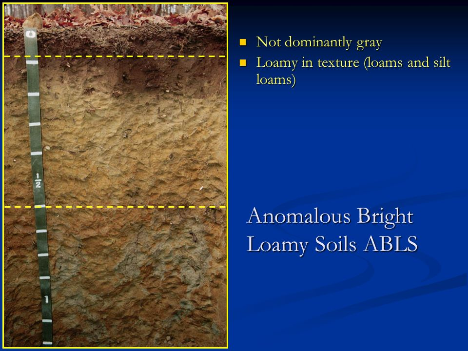 Not dominantly gray Not dominantly gray Loamy in texture (loams and silt loams) Loamy in texture (loams and silt loams) Anomalous Bright Loamy Soils ABLS