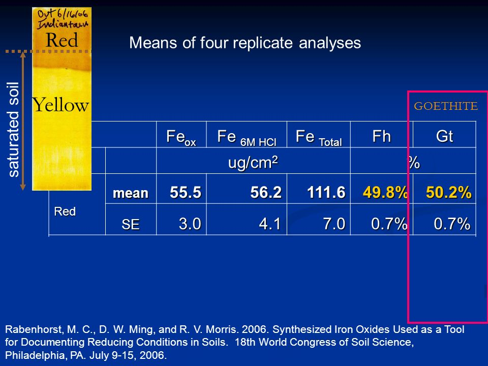 Means of four replicate analyses Fe ox Fe 6M HCl Fe Total FhGt ug/cm 2 % Red mean55.556.2111.649.8%50.2% SE3.04.17.00.7%0.7% Yellow mean5.172.277.36.7%93.3% SE0.99.910.21.3%1.3% saturated soil Red Yellow Rabenhorst, M.
