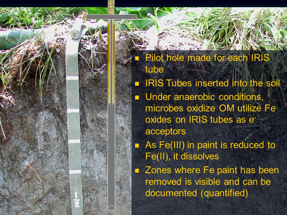 Pilot hole made for each IRIS tube IRIS Tubes inserted into the soil Under anaerobic conditions, microbes oxidize OM utilize Fe oxides on IRIS tubes as e - acceptors As Fe(III) in paint is reduced to Fe(II), it dissolves Zones where Fe paint has been removed is visible and can be documented (quantified)