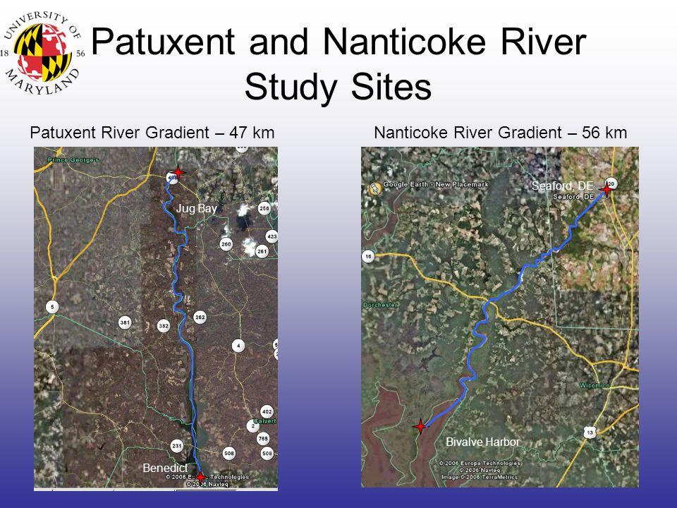 Patuxent and Nanticoke River Study Sites Patuxent River Gradient – 47 kmNanticoke River Gradient – 56 km Bivalve Harbor Seaford, DE Benedict Jug Bay