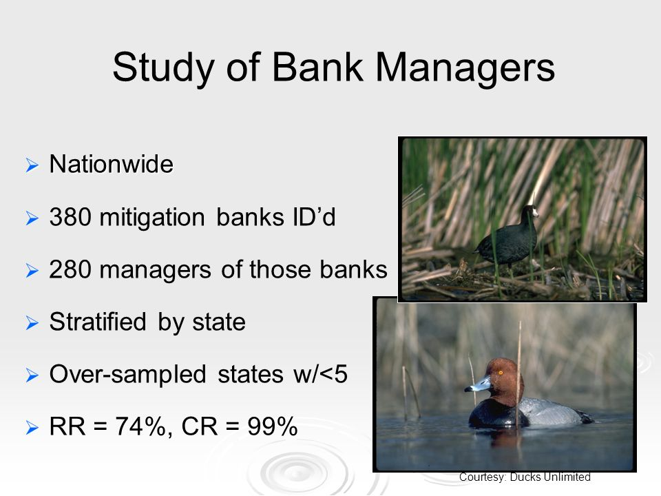 Study of Bank Managers Nationwide Nationwide 380 mitigation banks IDd 280 managers of those banks Stratified by state Over-sampled states w/<5 RR = 74%, CR = 99% Courtesy: Ducks Unlimited
