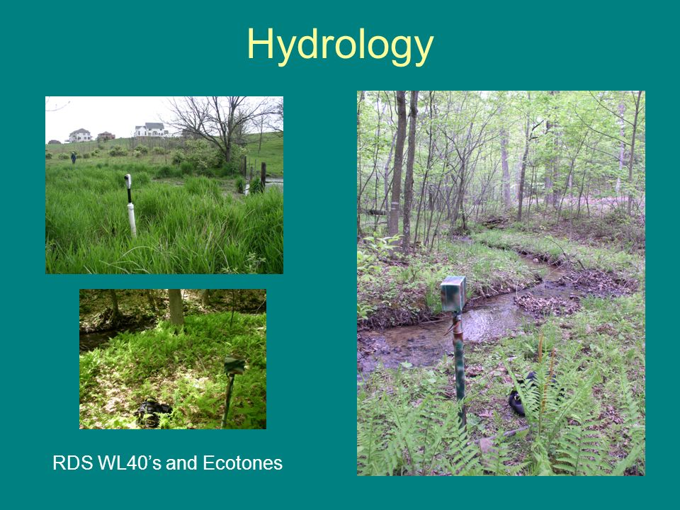 Hydrology RDS WL40s and Ecotones