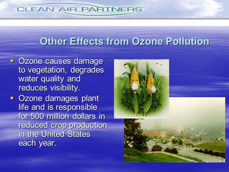 Other Effects from Ozone Pollution Ozone causes damage to vegetation, degrades water quality and reduces visibility. Ozone causes damage to vegetation