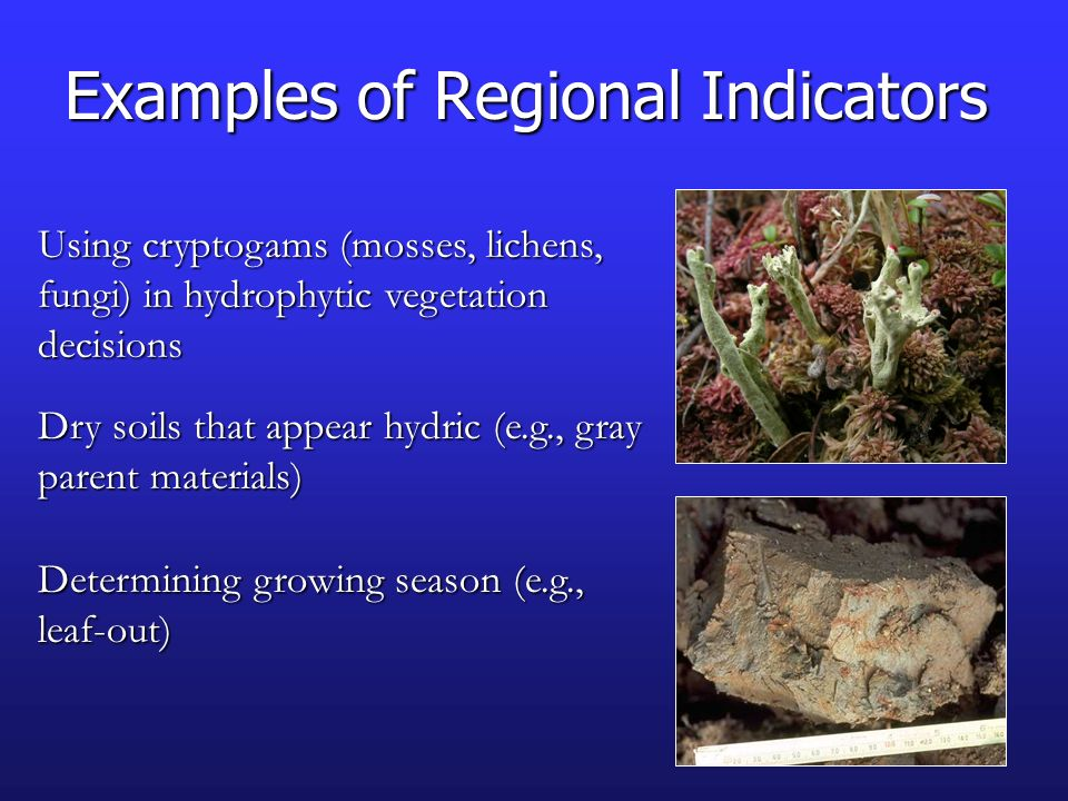 Examples of Regional Indicators Using cryptogams (mosses, lichens, fungi) in hydrophytic vegetation decisions Dry soils that appear hydric (e.g., gray