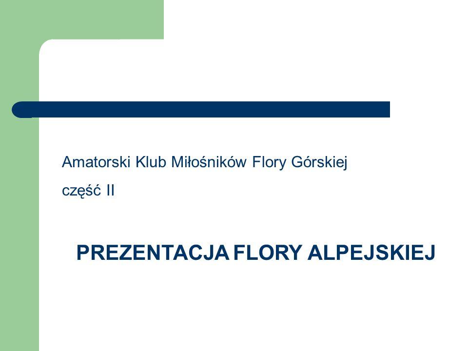 Amatorski Klub Miłośników Flory Górskiej część II PREZENTACJA FLORY ALPEJSKIEJ