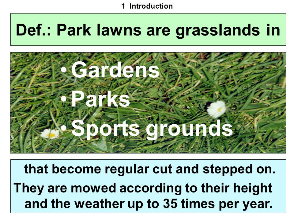 Def.: Park lawns are grasslands in Gardens Parks Sports grounds that become regular cut and stepped on. They are mowed according to their height and t