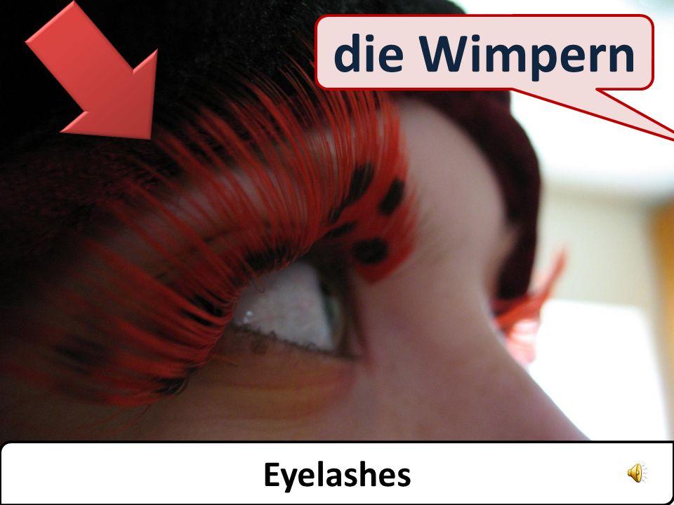 die Augenbrauen Eyebrows