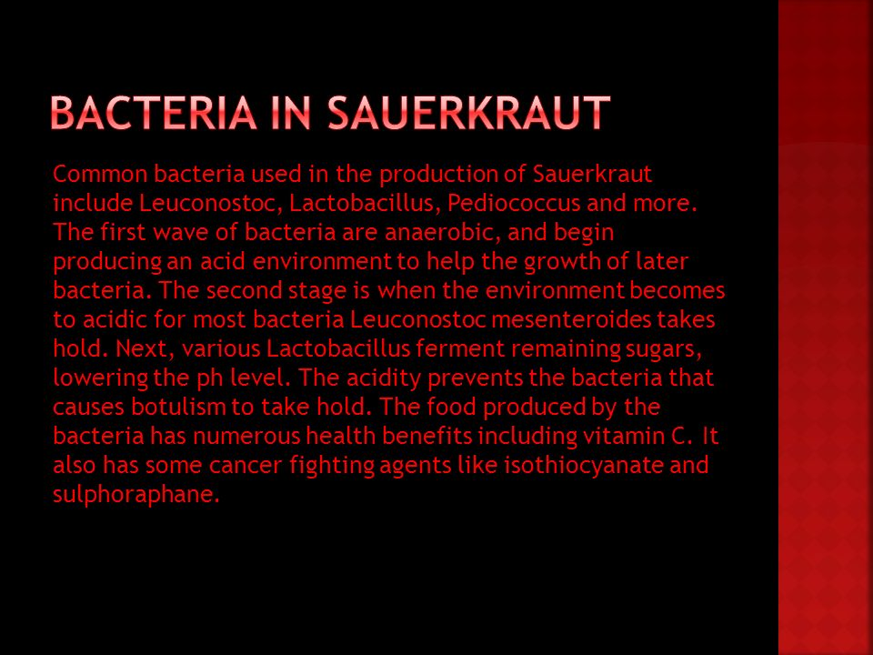 Common bacteria used in the production of Sauerkraut include Leuconostoc, Lactobacillus, Pediococcus and more. The first wave of bacteria are anaerobi