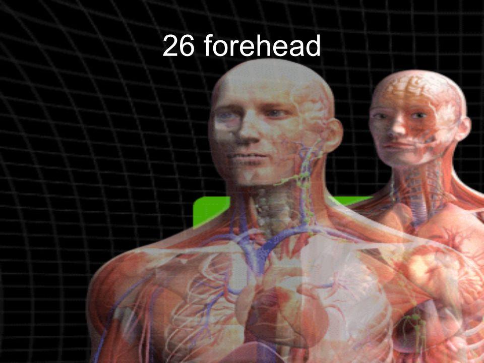 26 forehead