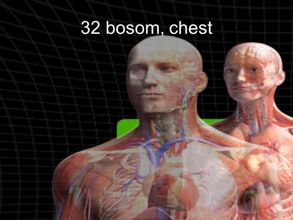 32 bosom, chest