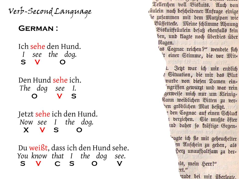 Verb-Second Language German : S VO Ich sehe den Hund.