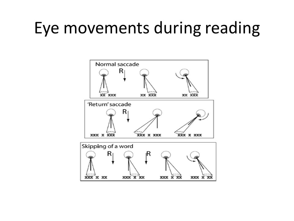 Eye movements during reading