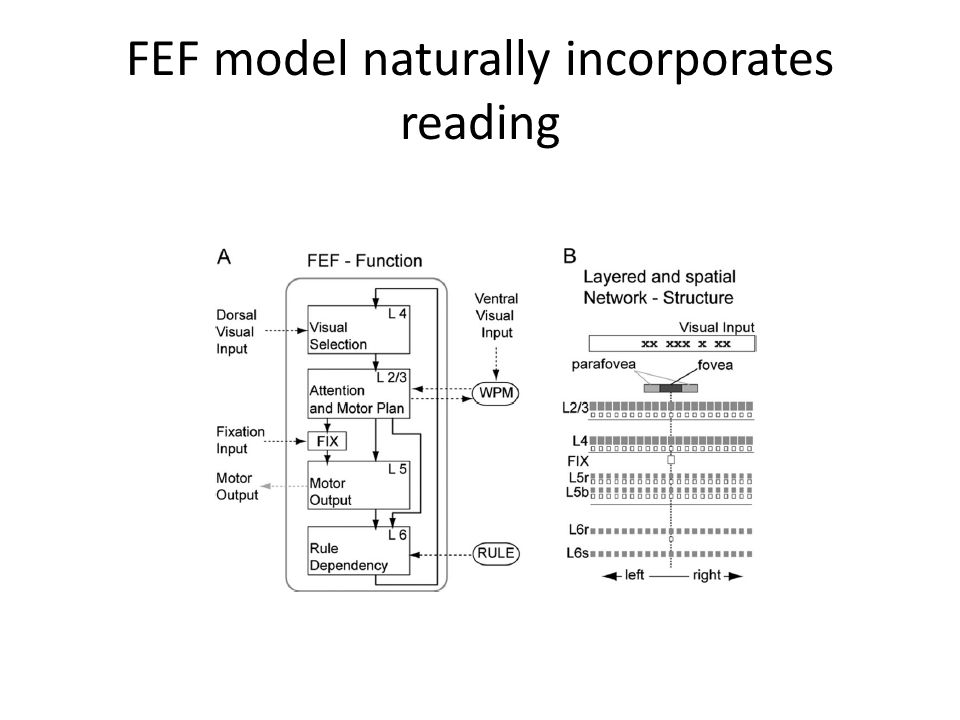 FEF model naturally incorporates reading