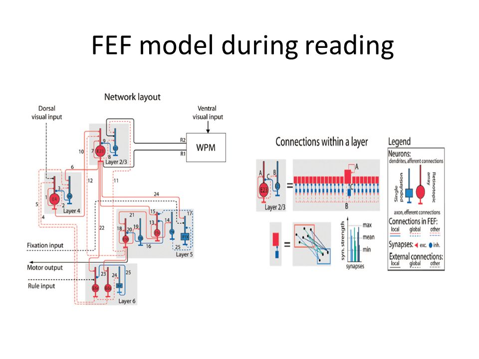 FEF model during reading
