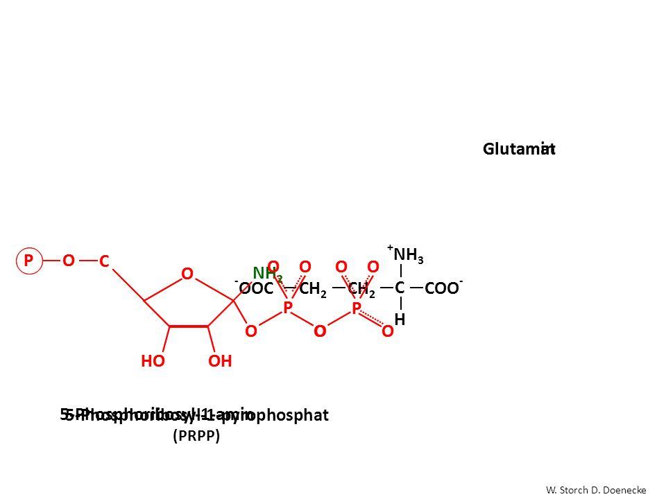 O OH HO C O OO P P OOOO PO 5-Phosphoribosyl-1-pyrophosphat (PRPP) H2NH2N COO - O CCH 2 C H + NH 3 GlutamatGlutamin COO -- OOCCH 2 C H + NH 3 O OH HO C PO NH 2 O O P OO O P OO O 5-Phosphoribosyl-1-amin W.