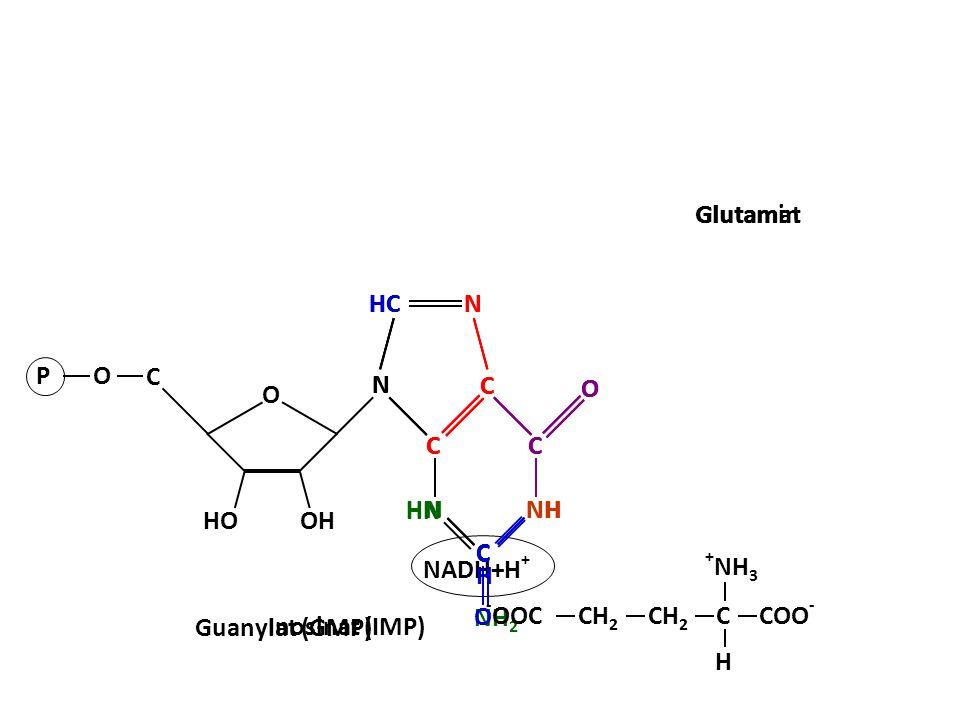 NADH+H + NAD N N N C C HC C O NH C H AMP O OH HO C PO ATP Inosinat (IMP) H2OH2O N HN N C C HC C O NH C O H2NH2N COO - O CCH 2 C H + NH 3 Glutamin COO -- OOCCH 2 C H + NH 3 Glutamat N N C C HC C O HN N C H Guanylat (GMP)