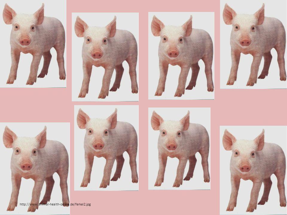 http://www.animal-health-online.de/ferkel2.jpg