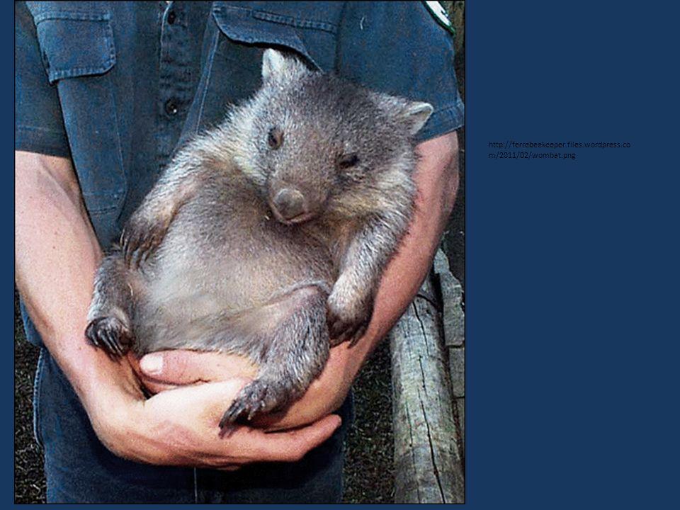 http://ferrebeekeeper.files.wordpress.co m/2011/02/wombat.png