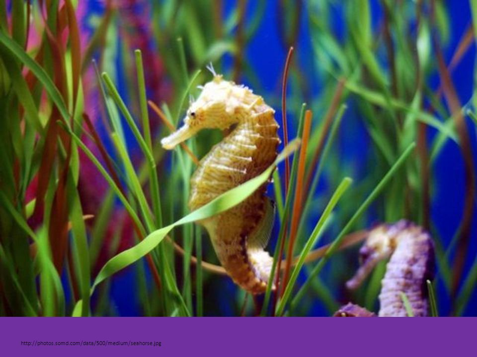 griffin seahorse http://photos.somd.com/data/500/medium/seahorse.jpg