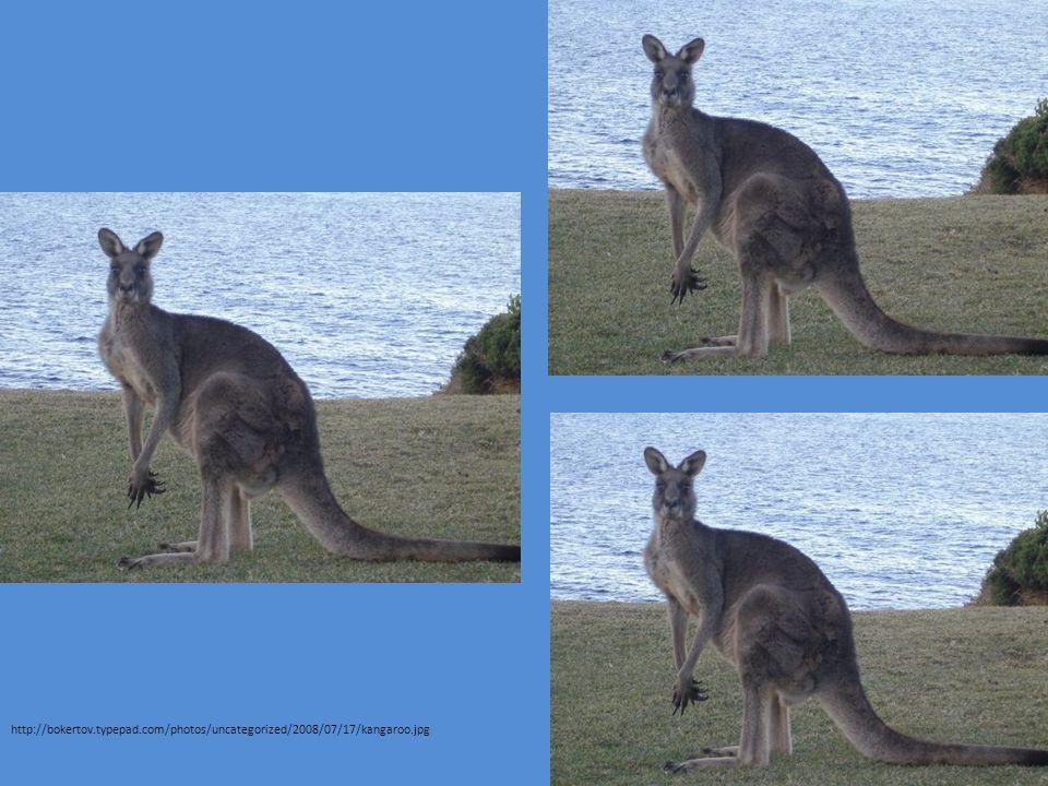 http://bokertov.typepad.com/photos/uncategorized/2008/07/17/kangaroo.jpg