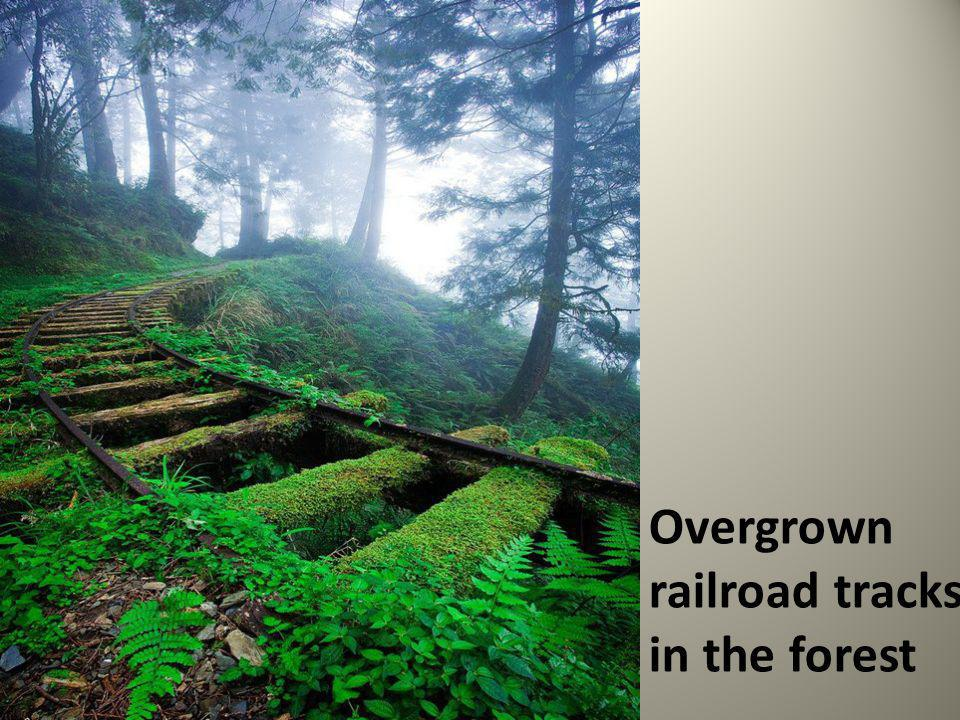 Overgrown railroad tracks in the forest