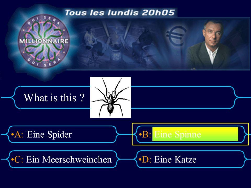 A:B: D:C: What is this ? Eine Spider Ein MeerschweinchenEine Katze Eine Spinne