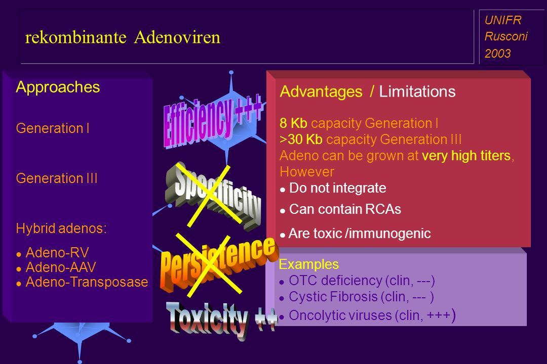 rekombinante Adenoviren a aa a aa UNIFR Rusconi 2003 Approaches Generation I Generation III Hybrid adenos: Adeno-RV Adeno-AAV Adeno-Transposase Examples OTC deficiency (clin, ---) Cystic Fibrosis (clin, --- ) Oncolytic viruses (clin, +++ ) Advantages / Limitations 8 Kb capacity Generation I >30 Kb capacity Generation III Adeno can be grown at very high titers, However Do not integrate Can contain RCAs Are toxic /immunogenic