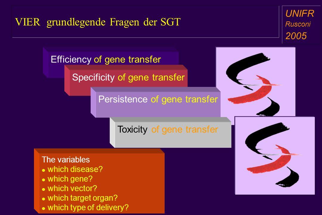 VIER grundlegende Fragen der SGT a aa a aa Efficiency of gene transfer Specificity of gene transfer Persistence of gene transfer Toxicity of gene tran