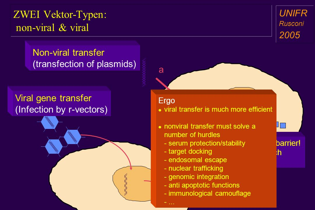 ZWEI Vektor-Typen: non-viral & viral a aa a aa a b Non-viral transfer (transfection of plasmids) Viral gene transfer (Infection by r-vectors) Nuclear