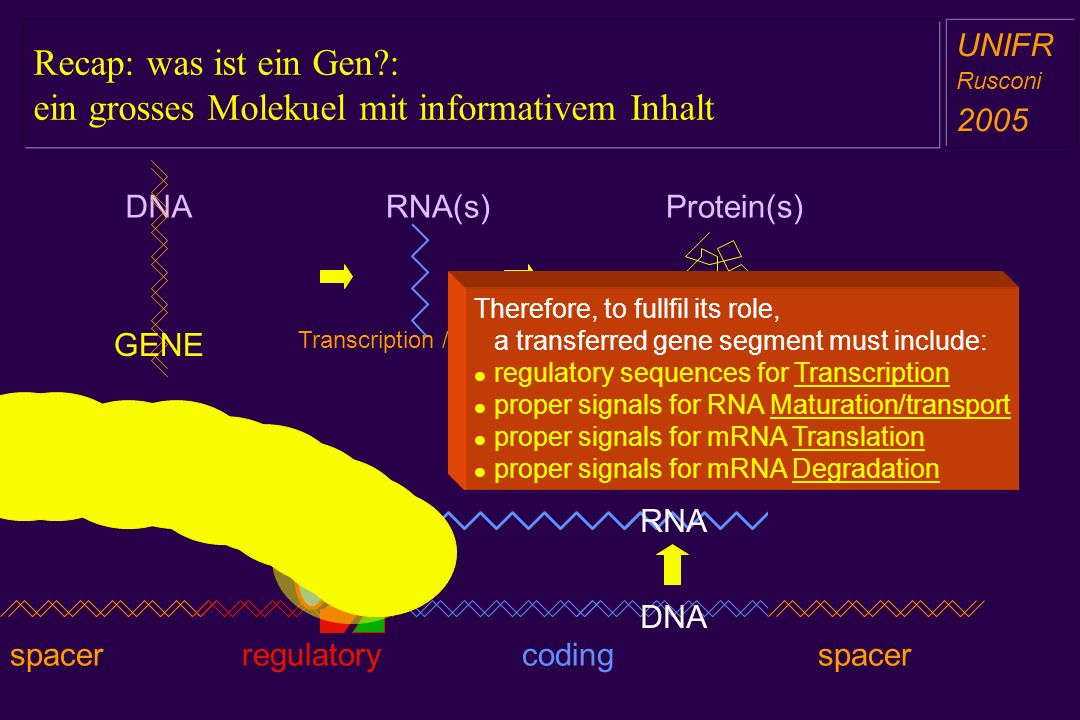 Schlussfolgerungen: GT hat Konzepte bewiesen aber bleibt immer noch im Pionierzustand a aa a aa Fundamentally many new potentially therapeutic genes identified All types of diseases can be virtually treated by gene transfer We start to manage efficiency, specificity, persistence and toxicity Vectors and models Choice of among a number of viral and non viral vectors NonViral vectors lower toxicity/danger BUT -> inefficient Viral vectors limited packaging and high toxicity BUT -> efficient Clinically Over 1000 trials and >4000 patients in 15 years Only a handful phase III Periodical pitfalls Gendicine approved in China (2004) Ergo we are somewhat ahead but still in the pioneering phase .