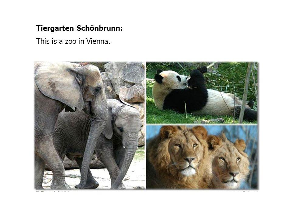 Tiergarten Schönbrunn: This is a zoo in Vienna.