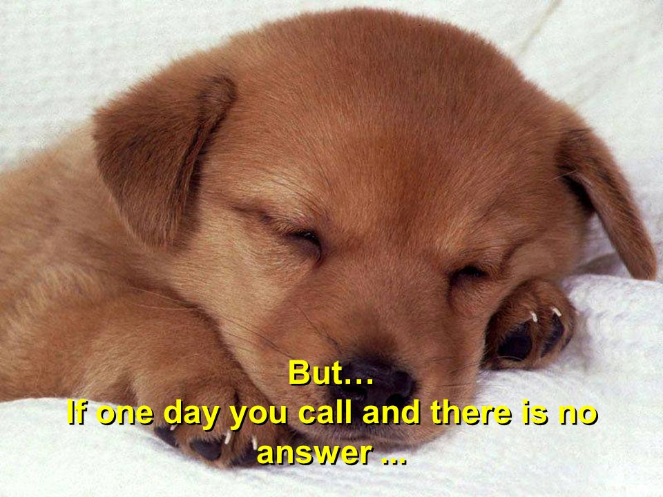 But… If one day you call and there is no answer... But… If one day you call and there is no answer...