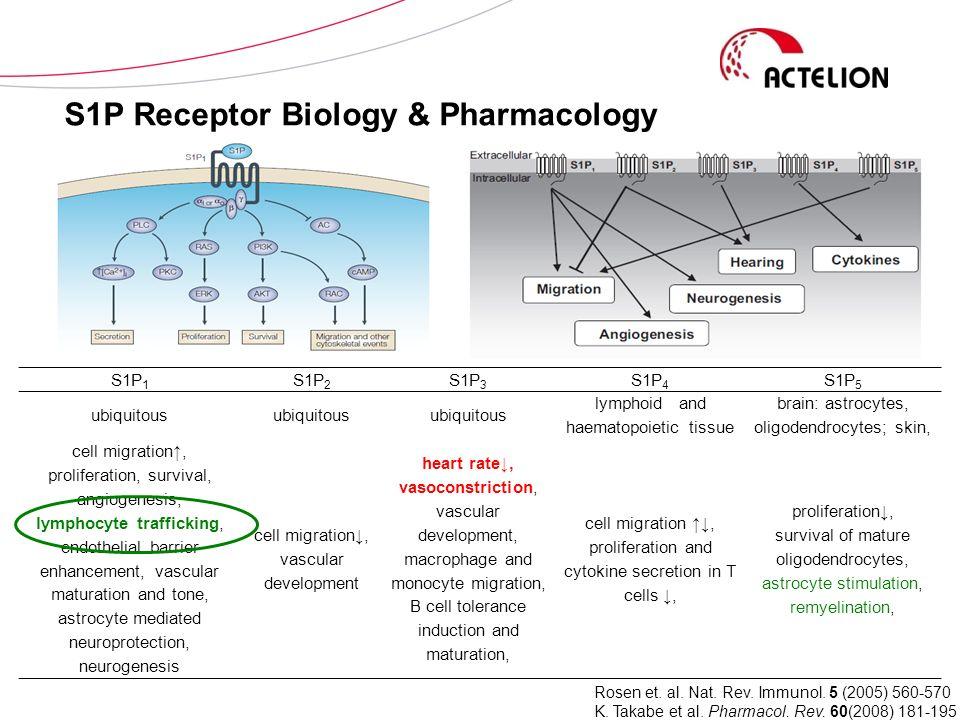 S1P Receptor Biology & Pharmacology S1P 1 S1P 2 S1P 3 S1P 4 S1P 5 ubiquitous lymphoid and haematopoietic tissue brain: astrocytes, oligodendrocytes; s