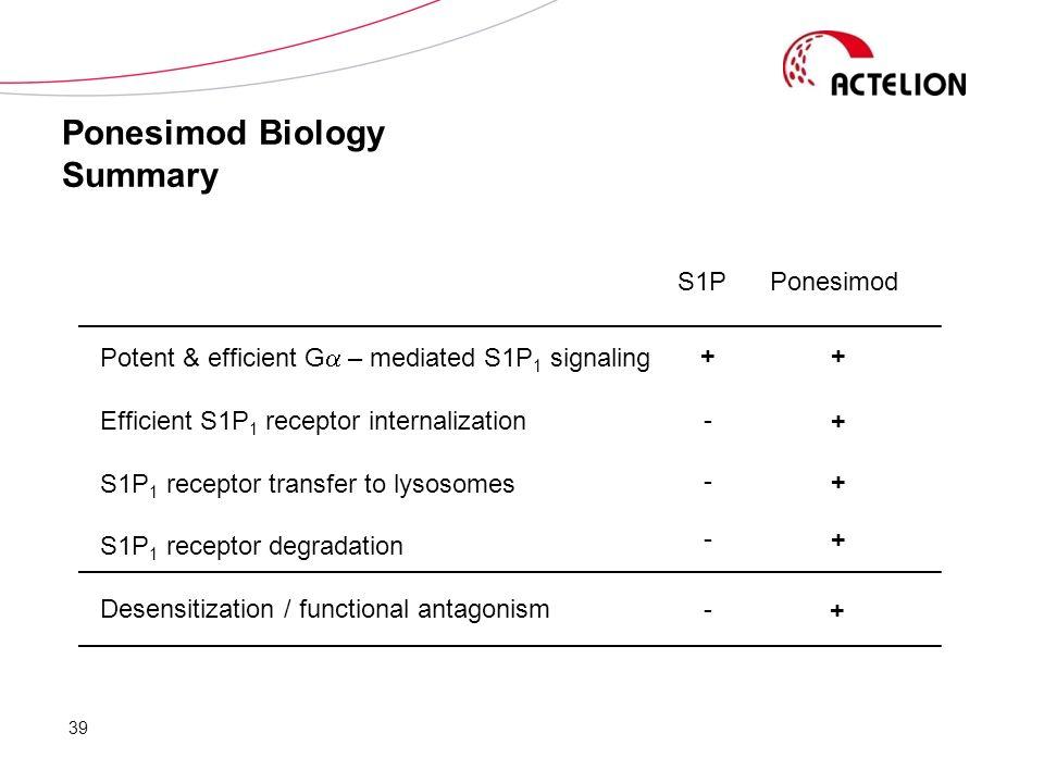 Ponesimod Biology Summary Potent & efficient G – mediated S1P 1 signaling Efficient S1P 1 receptor internalization S1P 1 receptor transfer to lysosome