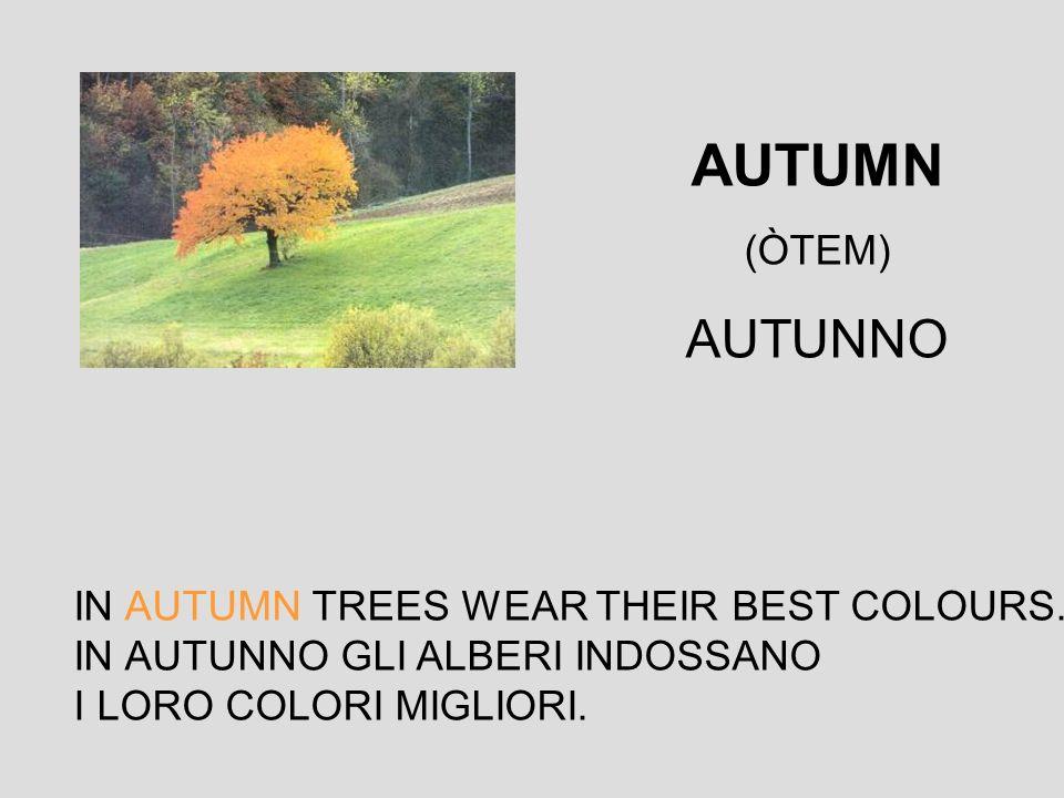 IN AUTUMN TREES WEAR THEIR BEST COLOURS. IN AUTUNNO GLI ALBERI INDOSSANO I LORO COLORI MIGLIORI. AUTUMN (ÒTEM) AUTUNNO
