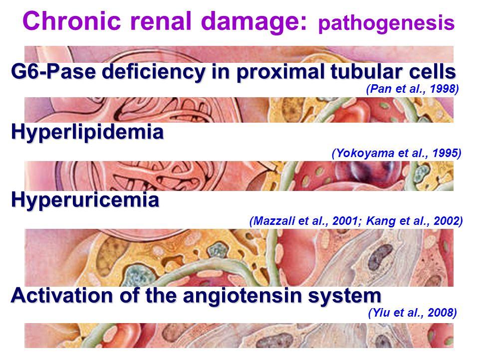 Chronic renal damage: pathogenesis Hyperlipidemia (Yokoyama et al., 1995) Activation of the angiotensin system Activation of the angiotensin system (Y