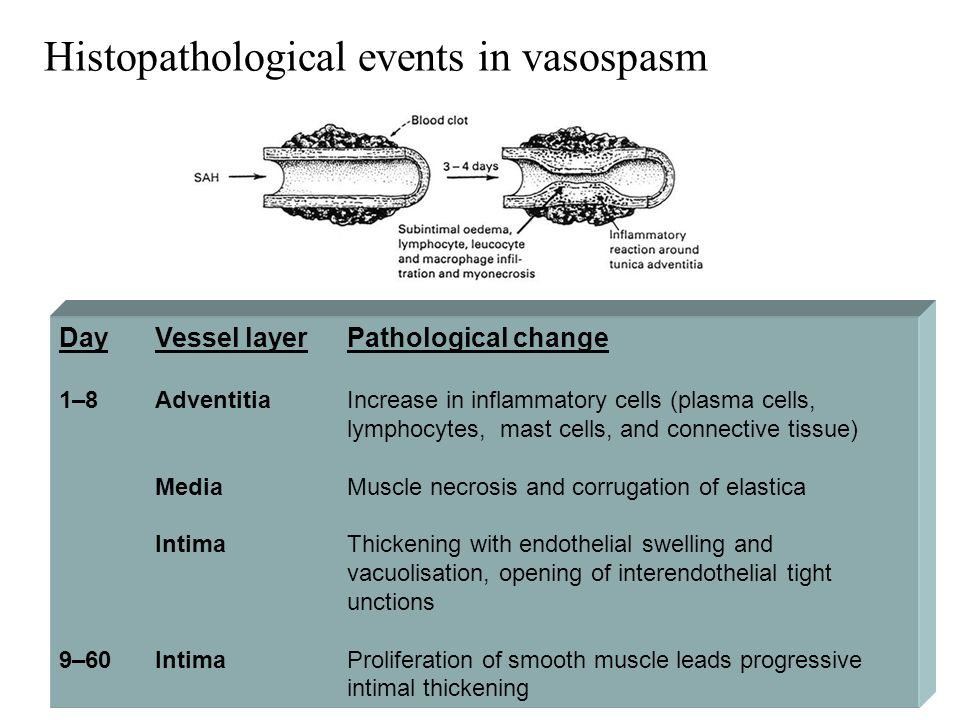 Day Vessel layer Pathological change 1–8 Adventitia Increase in inflammatory cells (plasma cells, lymphocytes, mast cells, and connective tissue) Medi