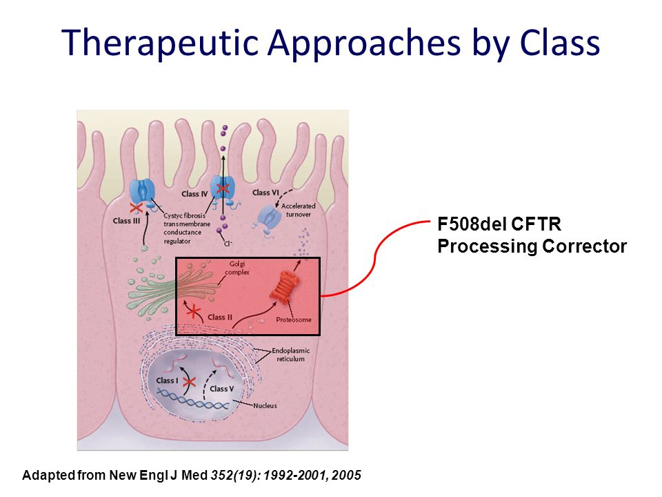 Therapeutic Approaches by Class F508del CFTR Processing Corrector Adapted from New Engl J Med 352(19): 1992-2001, 2005
