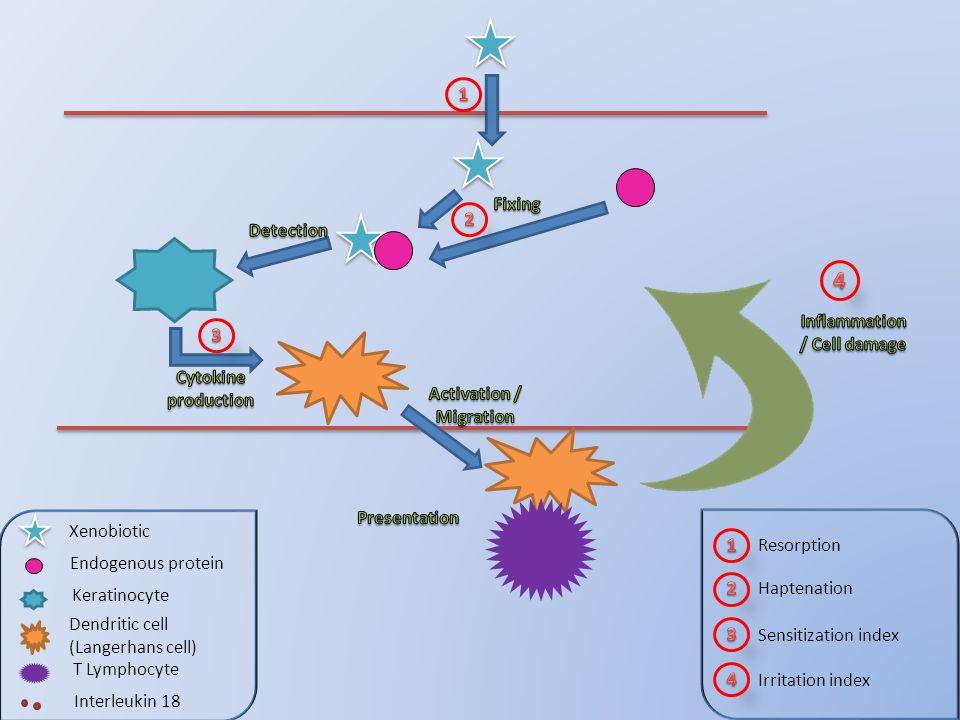 Xenobiotic Endogenous protein Keratinocyte Dendritic cell (Langerhans cell) T Lymphocyte Interleukin 18 Resorption Haptenation Sensitization index Irr