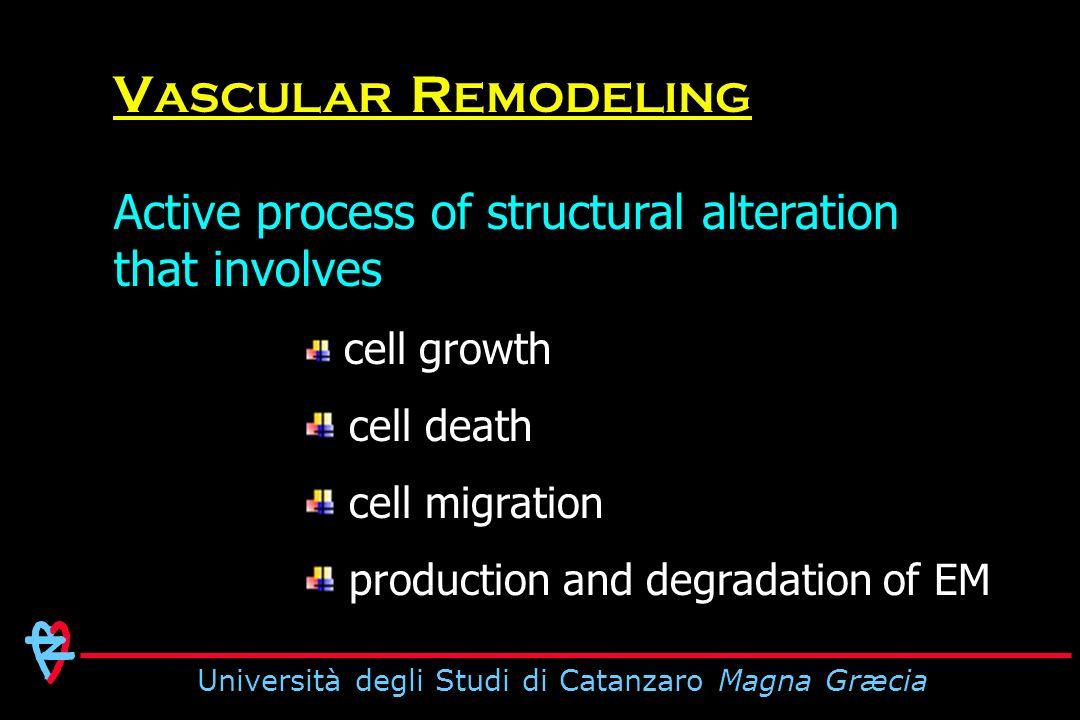 Università degli Studi di Catanzaro Magna Græcia Dynamic interaction between locally generated growth factors vasoactive substances hemodynamic stimuli V ASCULAR R EMODELING