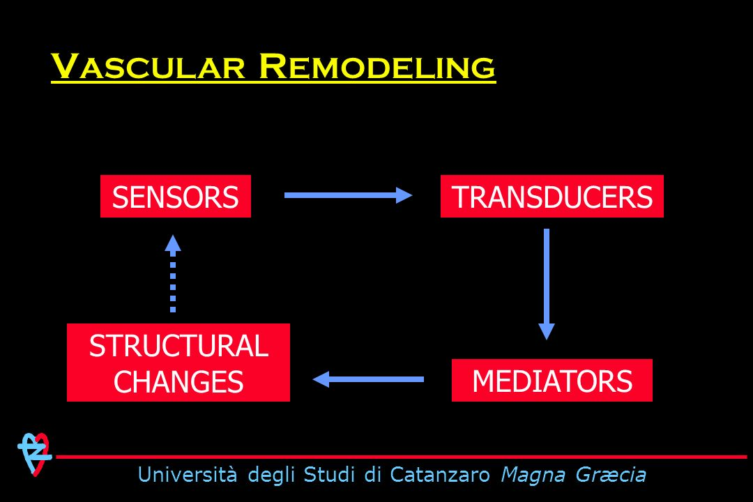 Università degli Studi di Catanzaro Magna Græcia SENSORSTRANSDUCERS MEDIATORS STRUCTURAL CHANGES V ASCULAR R EMODELING