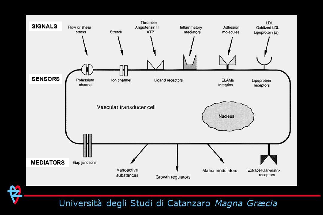 Università degli Studi di Catanzaro Magna Græcia Total CV Events (x 100 pts-years) cPP, mmHg Progressive Increase in CV Morbidity According to Tertiles of the Distribution of PP aPP, mmHg 65 53 Verdecchia P et al.
