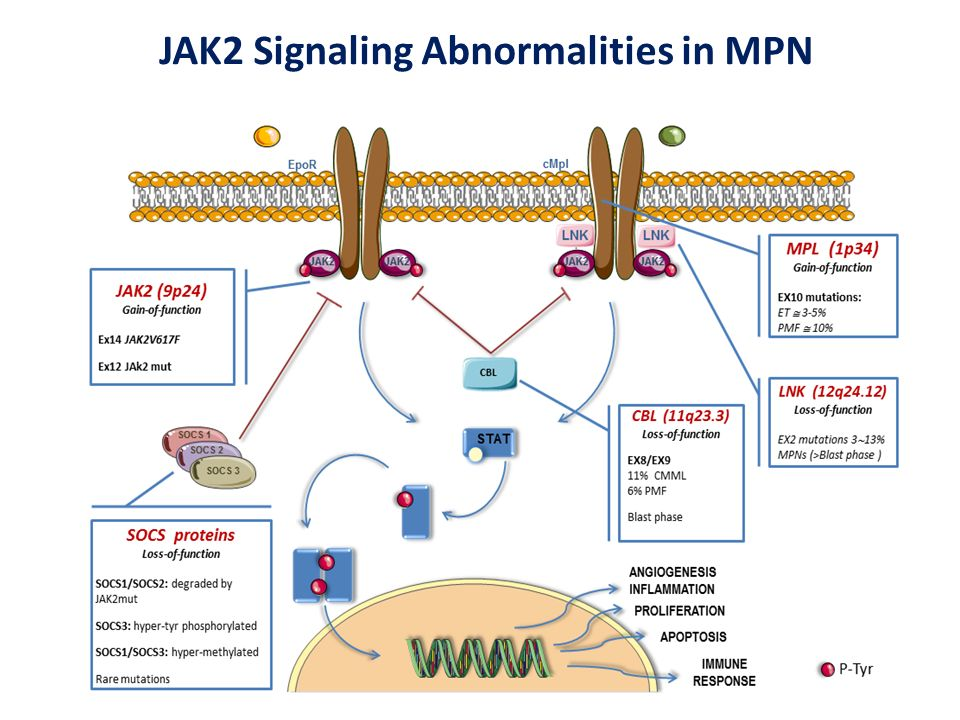 JAKs are Involved in Multiple Cytokine Signaling Vannucchi AM, N Engl J Med. 2010; 363:1180-2.