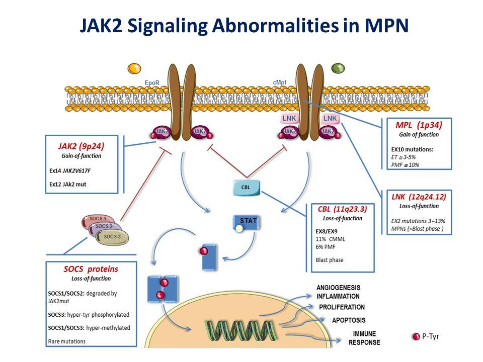 JAK2 Signaling Abnormalities in MPN