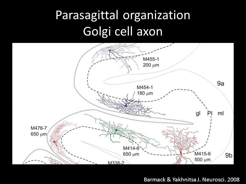 Parasagittal organization Golgi cell axon Barmack & Yakhnitsa J. Neurosci. 2008