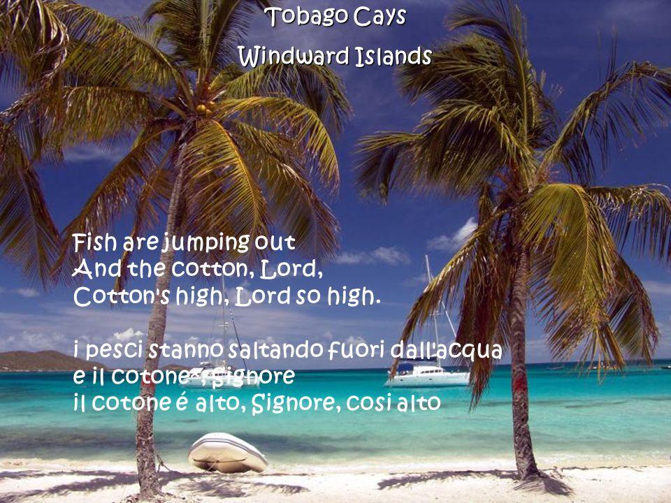 Trunk Bay Beach St.John U.S.