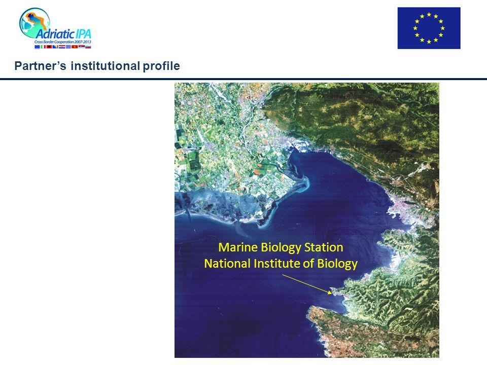 Partners institutional profile 1969 1978-1999 2000-2005 2006