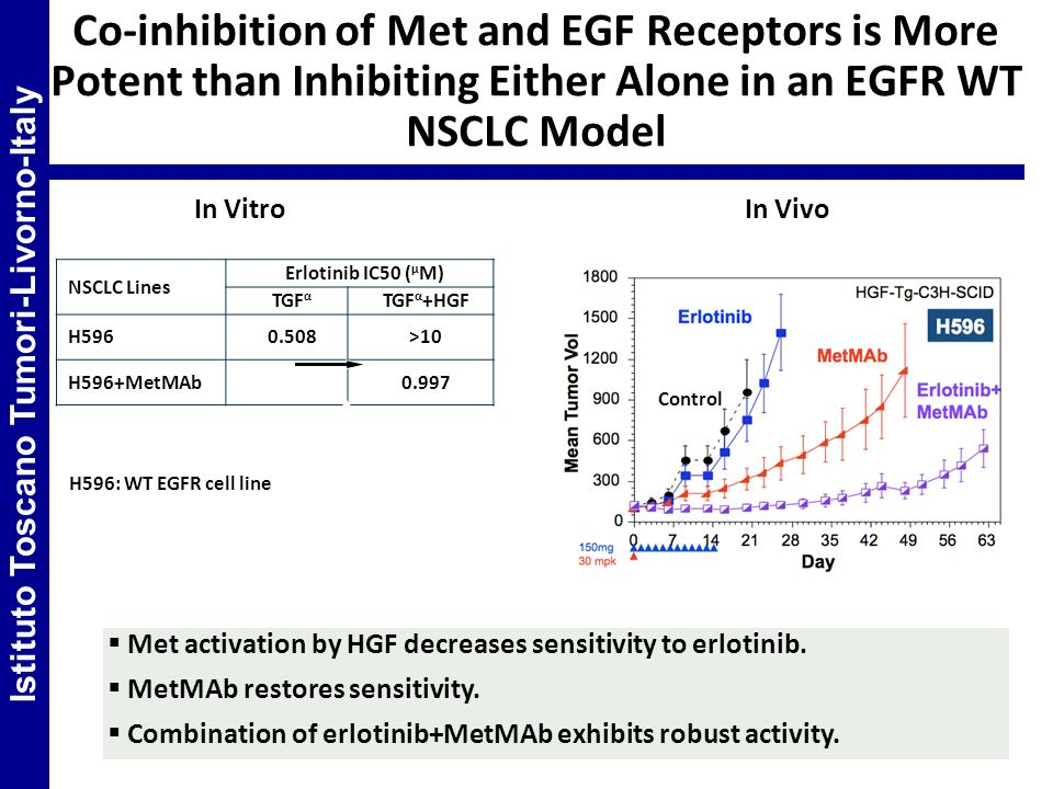 Met activation by HGF decreases sensitivity to erlotinib. MetMAb restores sensitivity. Combination of erlotinib+MetMAb exhibits robust activity. Co-in
